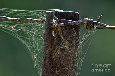 Photograph - Barbed Wire And Post by Joanne Kocwin