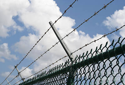 Barbed Wire Print by Blink Images