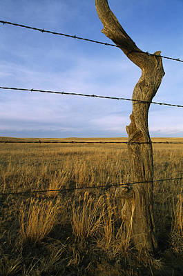 Barbed Wire Fence Along Dry Creek Road Art Print by Gordon Wiltsie