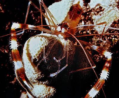 Photograph - Barbershop Shrimp by Bill Owen