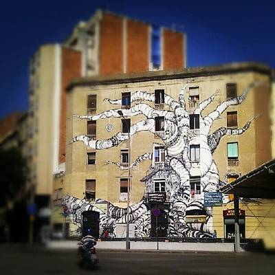 Banana Wall Art - Photograph - Barcelona's Art by Lana Banana