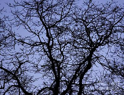 Photograph - Bare Branches by Erica Hanel