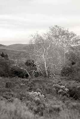 Photograph - Bare Garden In The Hills by Kathleen Grace