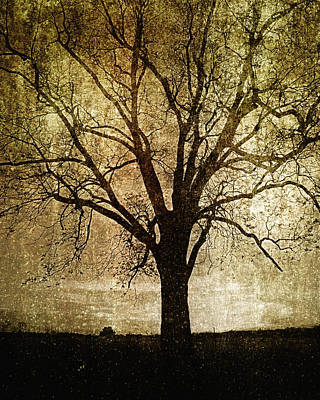 Inspirational Photograph - Bare Tree At Dusk by Skip Nall