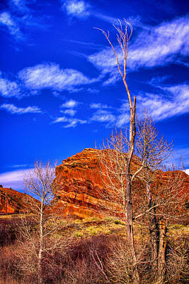 Colorado Photograph - Bare Trees At Red Rocks by David Patterson