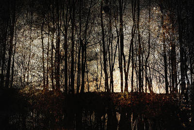 Bare Trees Print by Skip Nall