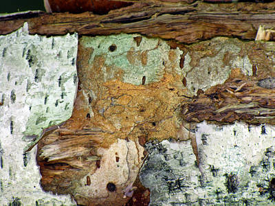 Photograph - Bark Abstraction by Lynda Lehmann