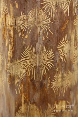 Bark Beetle Galleries Art Print by Ted Kinsman