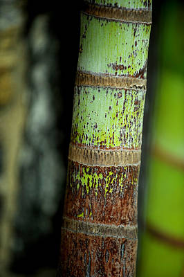 Photograph - Bark by Frank DiGiovanni