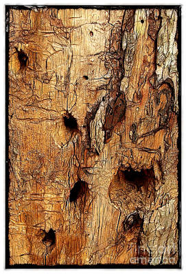 Photograph - Bark With Woodpecker Holes by Judi Bagwell