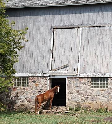 Art Print featuring the photograph Barn And Horse by Kristine Bogdanovich