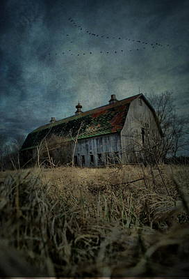 Photograph - Barn Flight by Emily Stauring