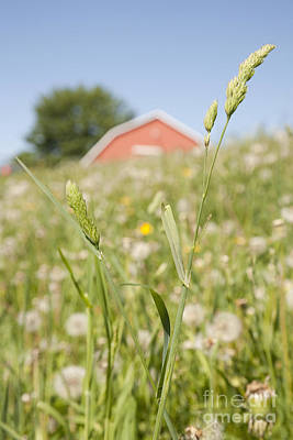 Close Focus Nature Scene Photograph - Barn On A Grass Slope by Shannon Fagan