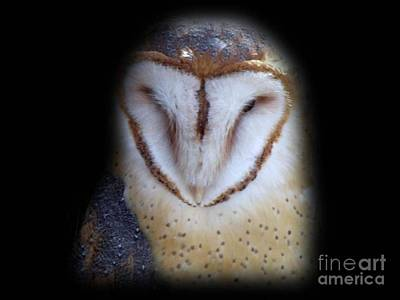 Photograph - Barn Owl by Donna Parlow