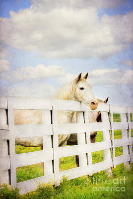 Barn Yard Dreamer Art Print by Darren Fisher