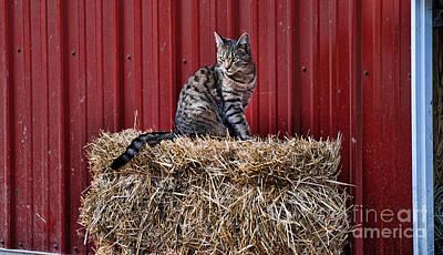 Barnyard Cat Art Print