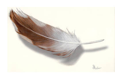Drawing - Barred Owl Feather by Brent Ander