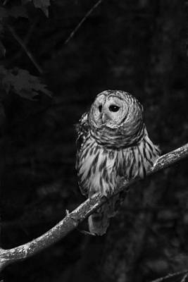 Photograph - Barred Owl by Glenn Gordon