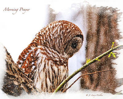 Barred Owl In Morning Prayer Art Print by J Larry Walker