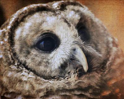 Photograph - Barred Owl by Jai Johnson