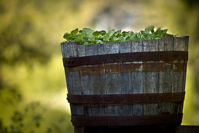 Photograph - Barrel Of Collards by Kim Henderson