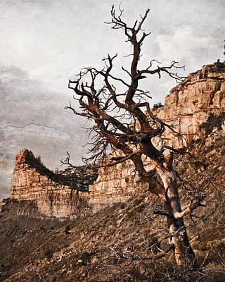 Barren Mesa Verde Art Print
