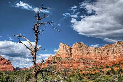 Photograph - Barren Perch by Anthony Citro