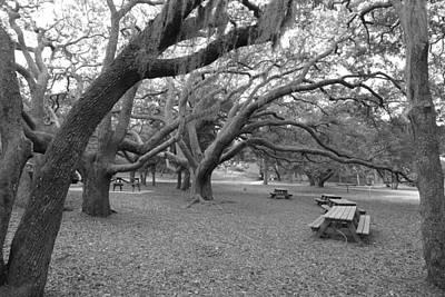 Photograph - Barrier Island Live Oaks by Joel Deutsch