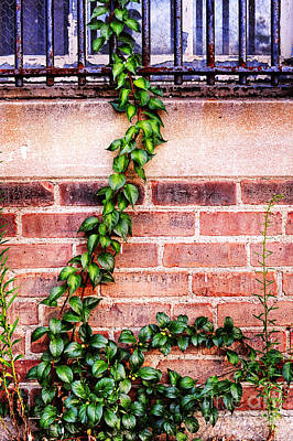 Bars And Ivy Art Print by HD Connelly
