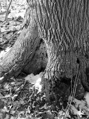 Photograph - Base Of The Tree by Douglas Pike