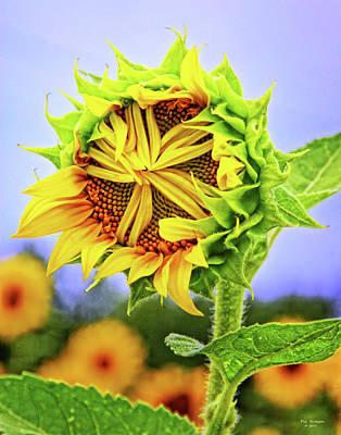 Photograph - Bashful Sunflower by Peg Runyan