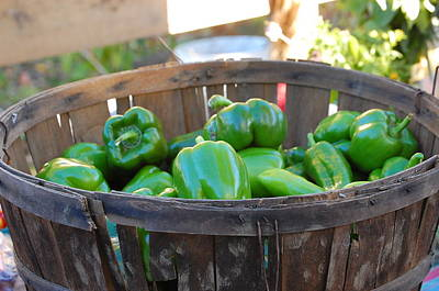 Art Print featuring the photograph Basket Of Green Peppers by Mary McAvoy