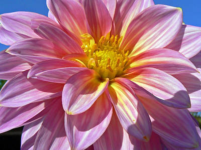 The Blue Dahlia Photograph - Basking In The Sun by Pamela Patch
