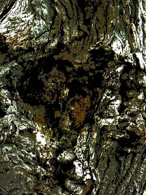 Photograph - Bass Lake Bark by Beth Akerman