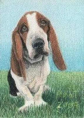 Drawing - Basset Hound - Aceo by Ana Tirolese