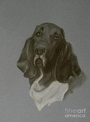 Drawing - Basset Hound by Susan Herber