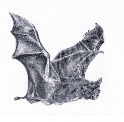 Art Print featuring the drawing Bat by Lucy D