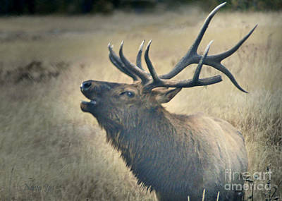 Art Print featuring the photograph Battle Tested Elk Warrior by Nava Thompson
