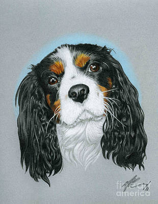 Spaniel Drawing - Baxter by Marshall Robinson