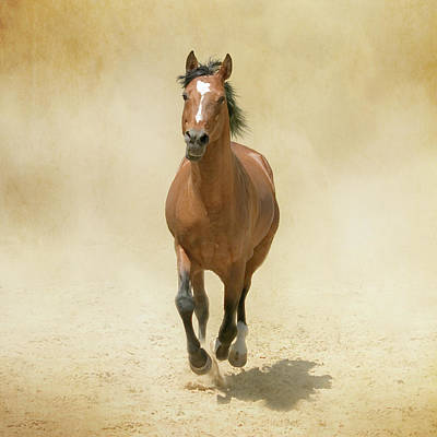Bay Horse Galloping In Dust Art Print by Christiana Stawski