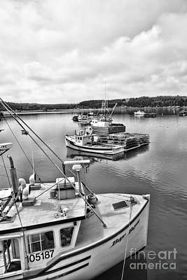 Photograph - Bay Life by Traci Cottingham