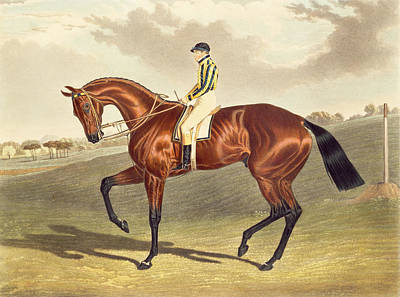 Bay Thoroughbred Horse Painting - Bay Middleton Winner Of The Derby In 1836 by John Frederick Herring Snr