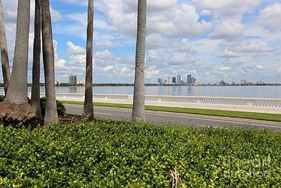 Bayshore Through Palms Art Print by Carol Groenen