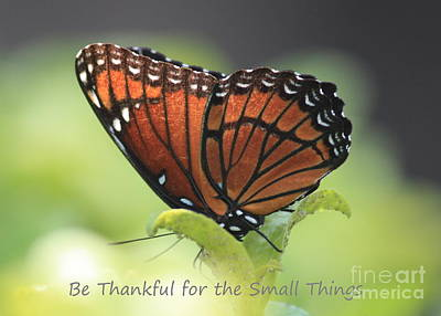 Positive Attitude Photograph - Be Thankful by Carol Groenen