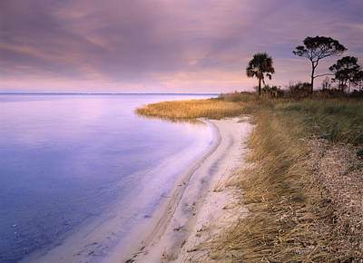 Beach Along Saint Josephs Bay Florida Print by Tim Fitzharris