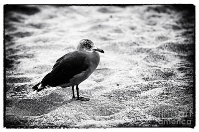 Photograph - Beach Bird Study by John Rizzuto