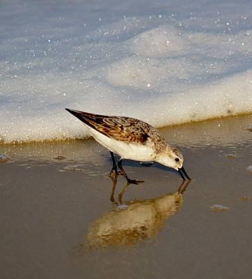 Pasta Al Dente - Beach Bird by Billy Beck