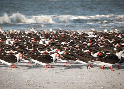 Tybee Island Photograph - Beach Birds by Steven  Michael