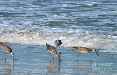 Photograph - Beach Birds by Tammy Herrin