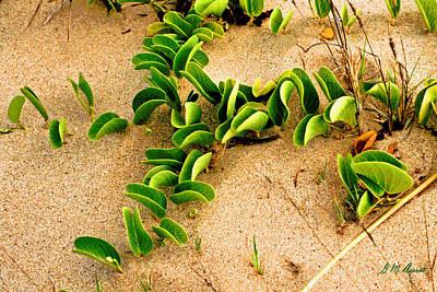 Beach Crawler Original by Michael Durst